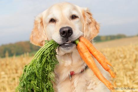 Quieres que tu perro sea vegetariano o vegano