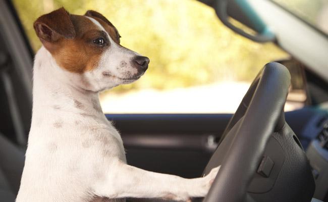 Quiero viajar con mi mascota