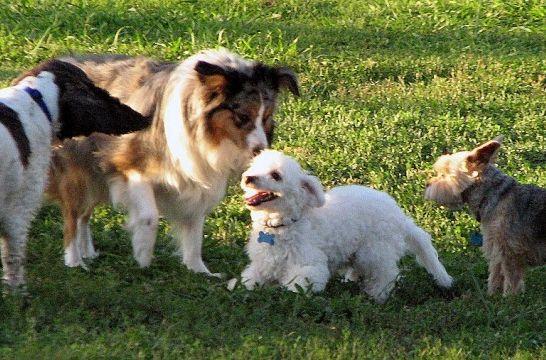 síntomas de celo en las perras