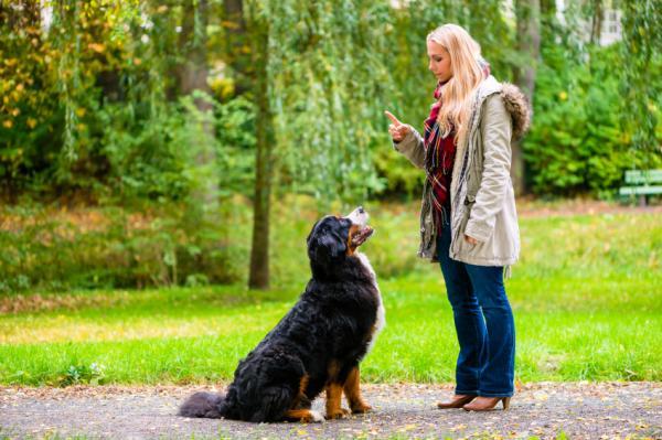 Sueles pasear a tu perro sin correa