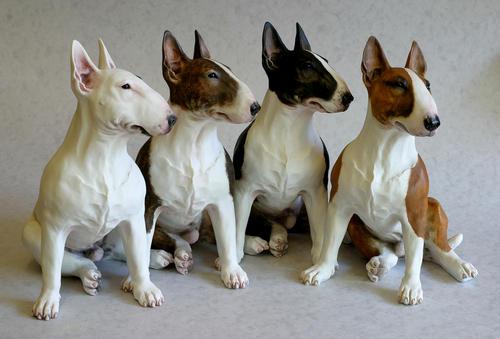Temperamento del perro bull terrier inglés