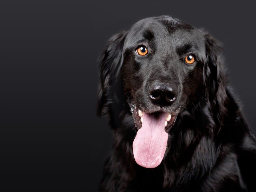 Trucos para cuidar mejor de los perros de raza grande