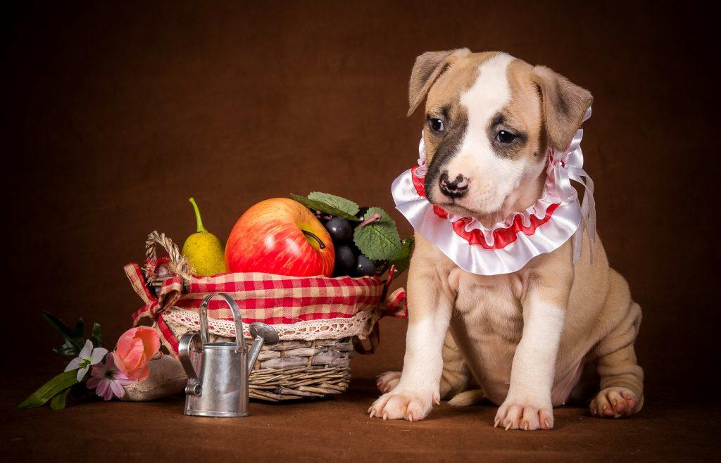 Verduras que pueden comer los perros