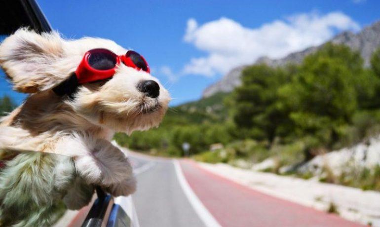 viajar-con-mascotas-sin-estres