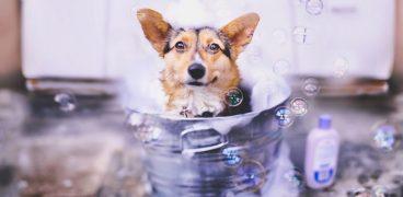Aprende a hacer champú casero para perros