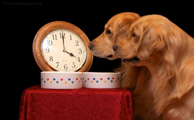 Así es como funciona el olfato de los perros