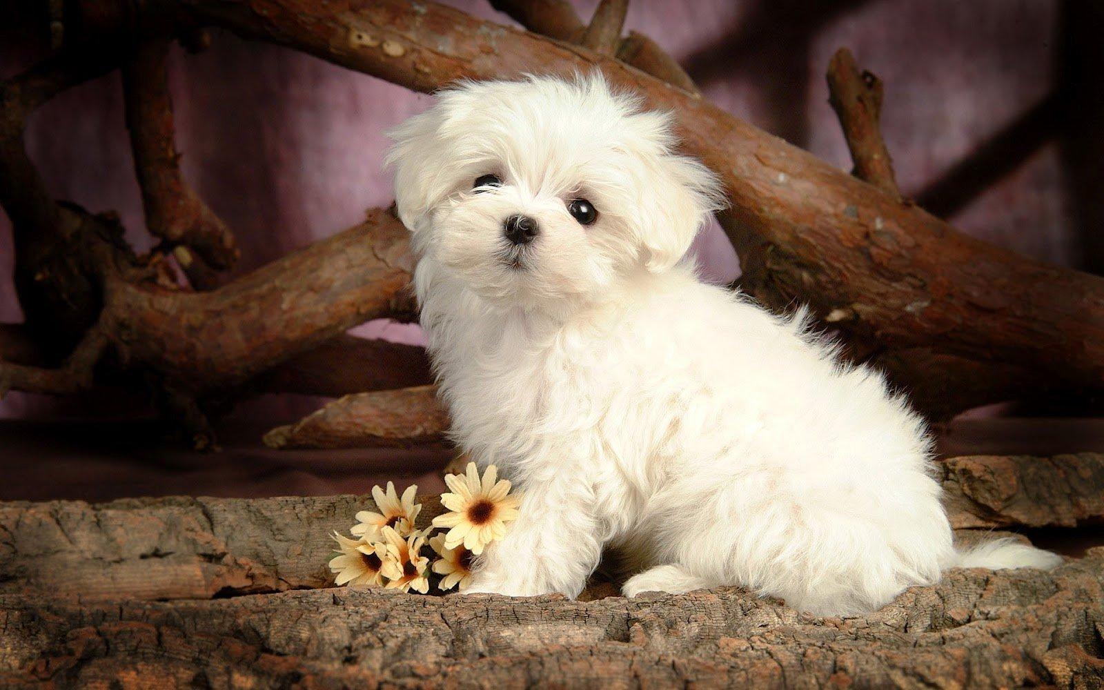 Cute Dog Images Hd Wallpapers Desktop Images Fidelity: Descubre Los Aspectos Más Importantes De La Raza De Perro