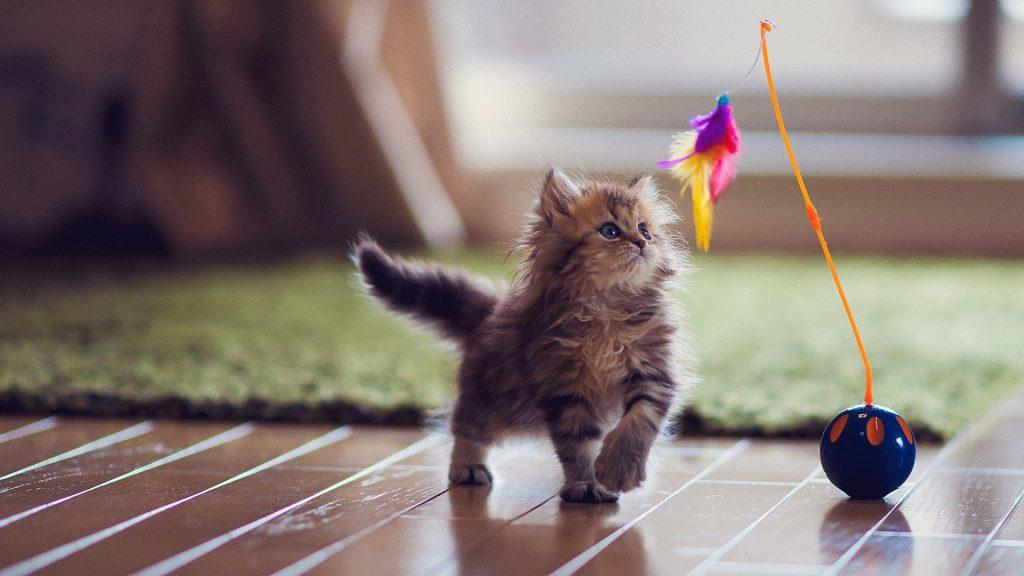 Cómo atraer al gato para que nos haga caso