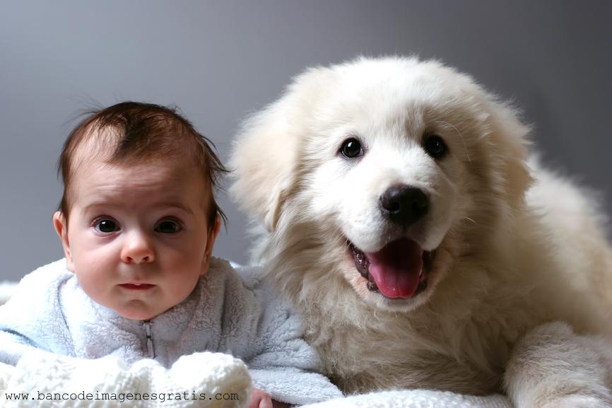 Cómo saber si mi perro está celoso de mi bebé