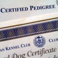 Cómo saber si un perro tiene pedigree