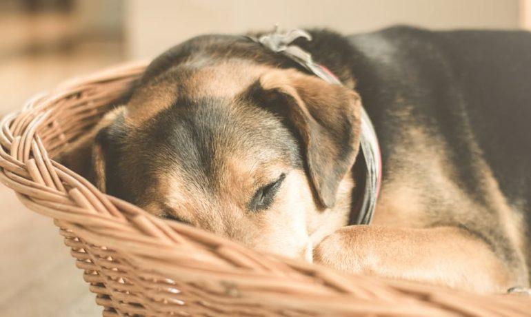 Consejos para calmar la ansiedad por separación en perros