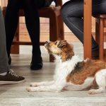 Consejos para educar a perros que se portan mal con las visitas