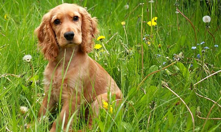 Descubre los 5 consejos para que tu perro sea feliz