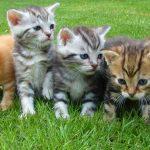Cuál es la edad de los gatos en años humanos