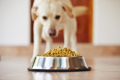 De qué están hechos los piensos para perros
