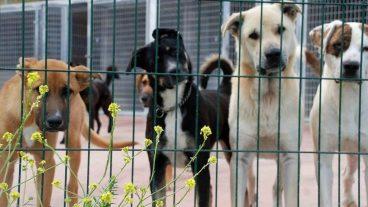 Diferencias entre una casa de acogida y una protectora de animales