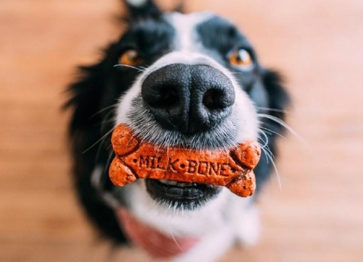 educa a tu perro con amor y paciencia