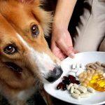 En qué se diferencian las vitaminas a los complejos vitamínicos para perros