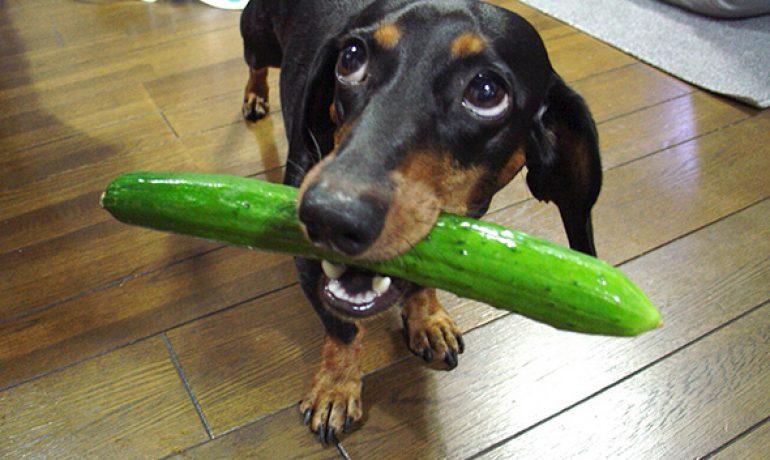 Existen los perros vegetarianos