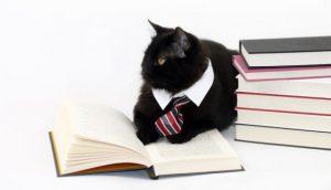 gato abogado