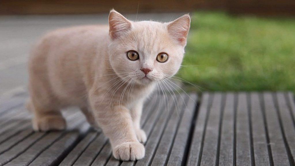 La edad de los gatos en años humanos