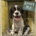 Los consejos que necesitas para educar a tu perro adoptado