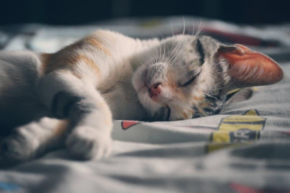Los gatos y la salud cardíaca