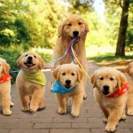 Los perros reconocen a sus padres