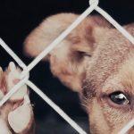 suiza protectora con animales