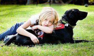 perro con niño diabetico
