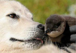 perro-pinguino