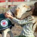 perros detectores de diabetes principal