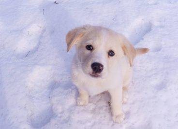 Por qué a los perros les gusta tanto la nieve