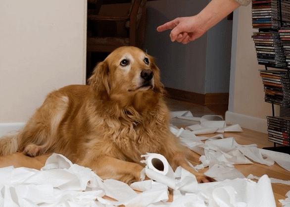 Por qué elegir el refuerzo positivo para educar a tu perro