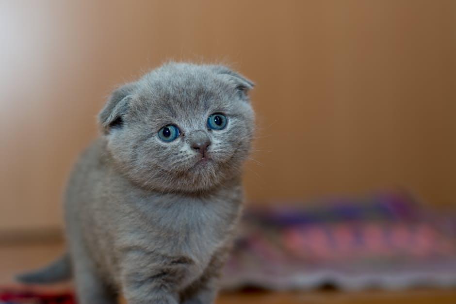 Por qué los gatos mejoran la salud cardiovascular