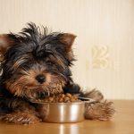 Por qué tu perro debe comer de un cuenco de acero inoxidable