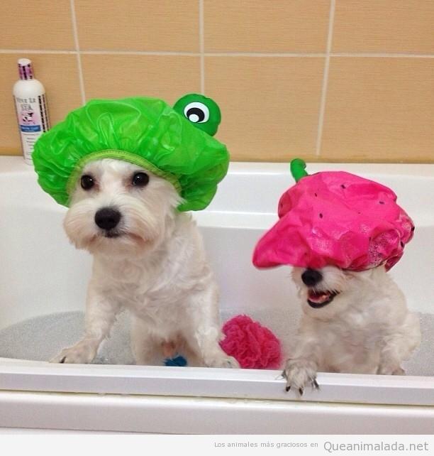Prepara a tu mascota para el baño