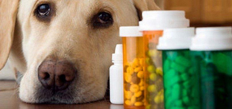 Puedo darle a mi perro vitaminas de humano