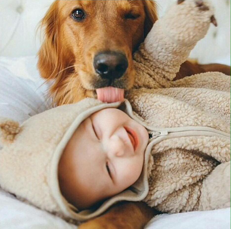 Qué hago si mi perro está celoso de mi bebé