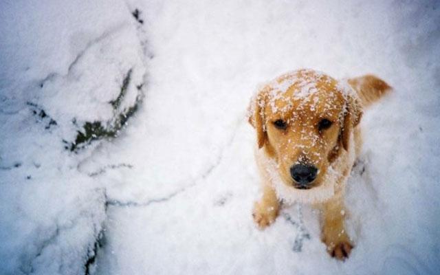 Qué precauciones debes tomar para llevar a tu perro a la nieve