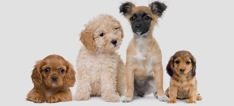 descubre c mo calcular la edad de los perros en a os humanos. Black Bedroom Furniture Sets. Home Design Ideas