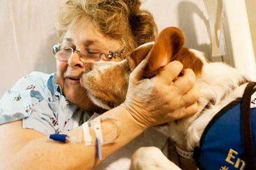 Sabías que hay perros que detectan el cáncer de pecho