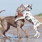Sabías que se puede detener una pelea de perros con agua