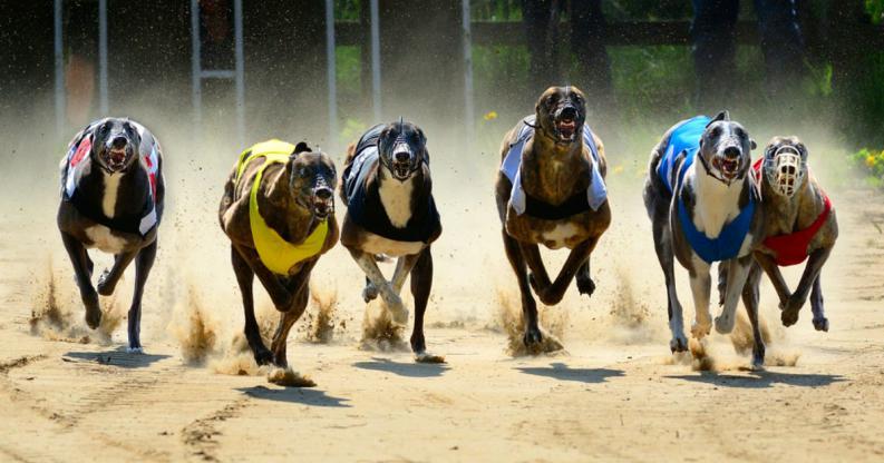 Se prohíben las carreras de perros