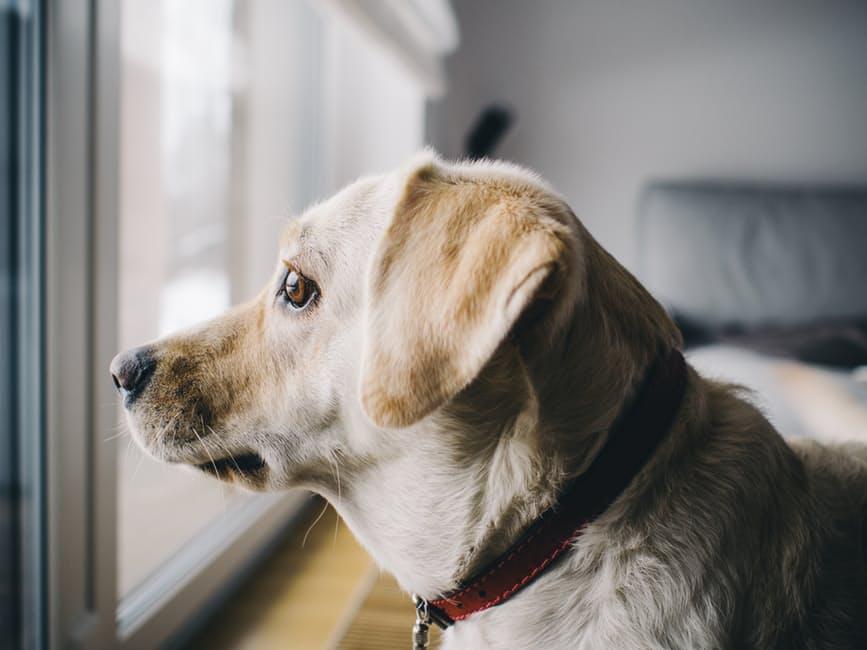 Síntomas ansiedad por separación en perros
