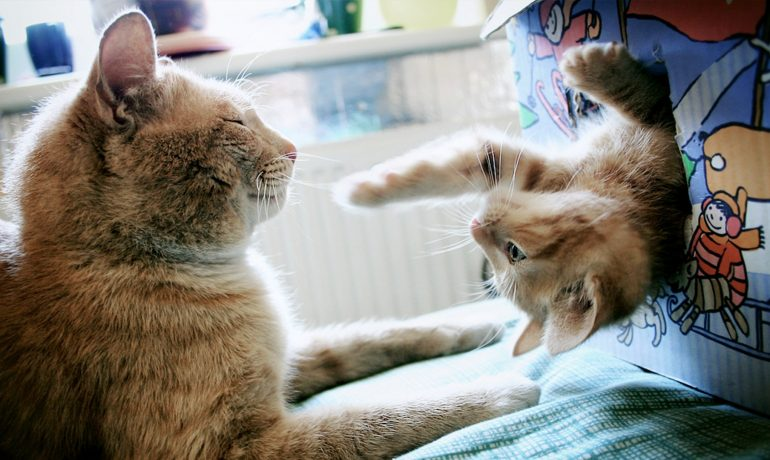 Te enseñamos cómo socializar a un gato para que sea un solete
