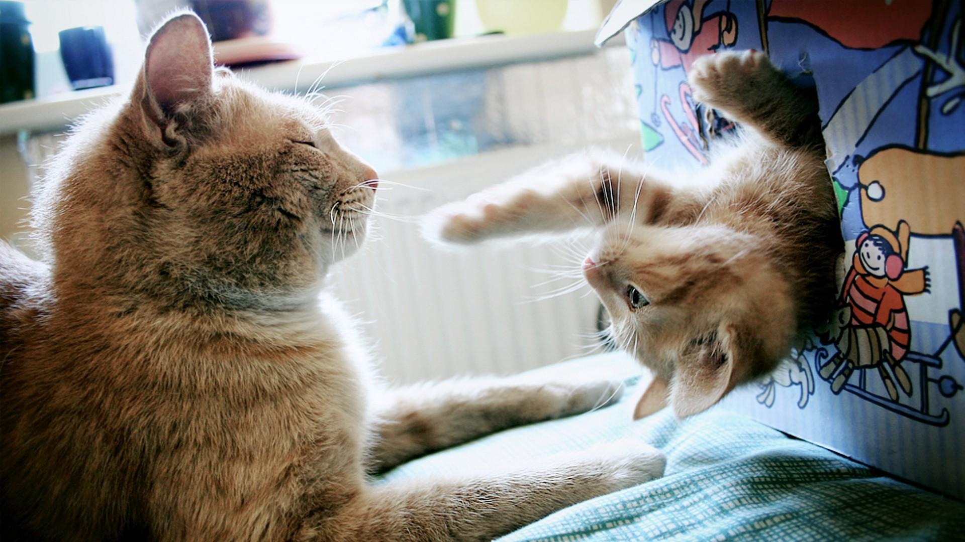 Resultado de imagen para gatos conociendo otros gatos
