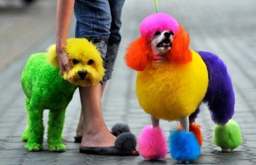 Teñir el pelo a un perro