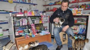 tienda refugio gatos