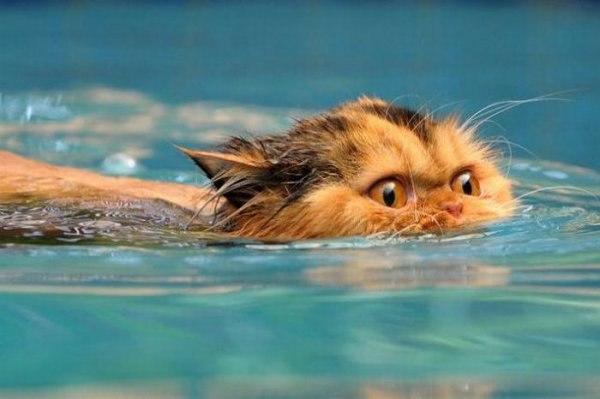 Tu gato tiene PÁNICO ABSOLUTO al agua y es imposible bañarlo